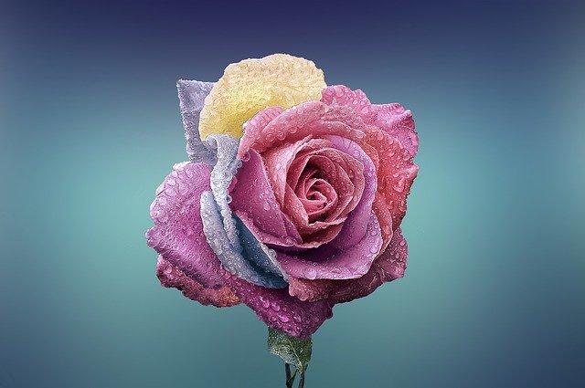hoa đẹp làm hình nền 1