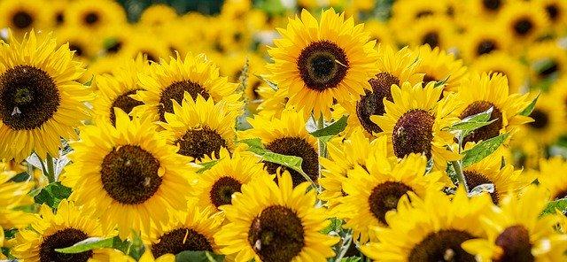 hoa đẹp làm hình nền 10