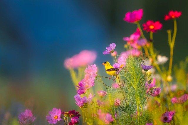 hoa đẹp làm hình nền 13
