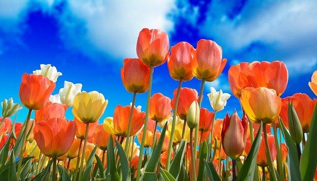 hoa đẹp làm hình nền 15