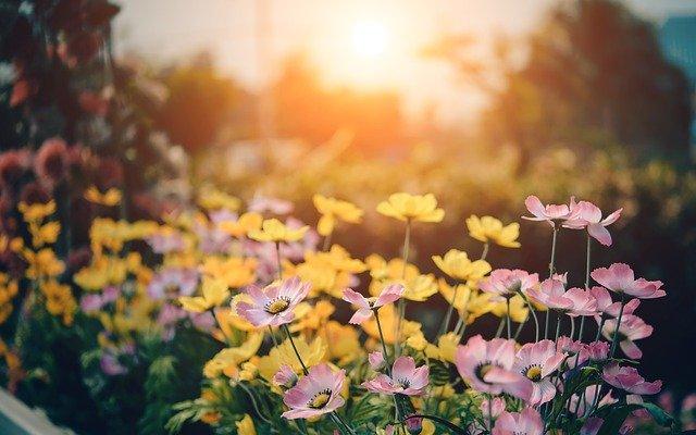 hoa đẹp làm hình nền 16
