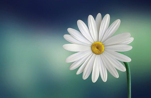 hoa đẹp làm hình nền 2