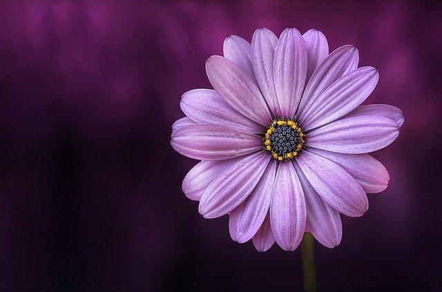 hoa đẹp làm hình nền 3