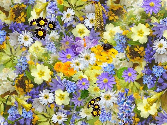 hoa đẹp làm hình nền 4