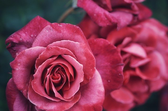 hoa đẹp làm hình nền 6