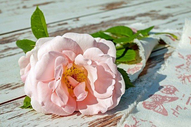 hoa đẹp làm hình nền 8