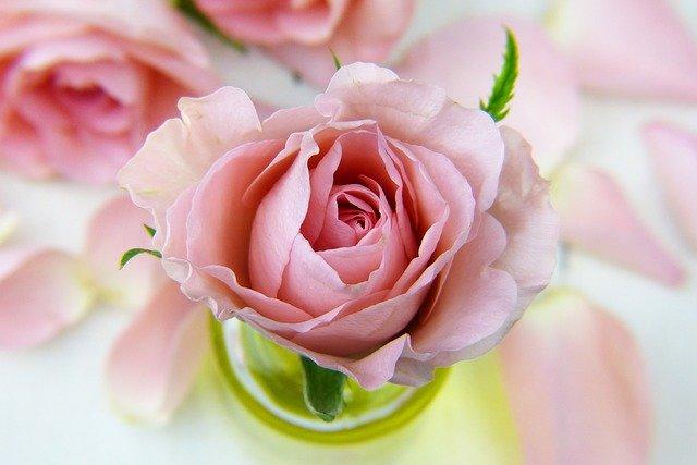 hoa đẹp làm hình nền 9