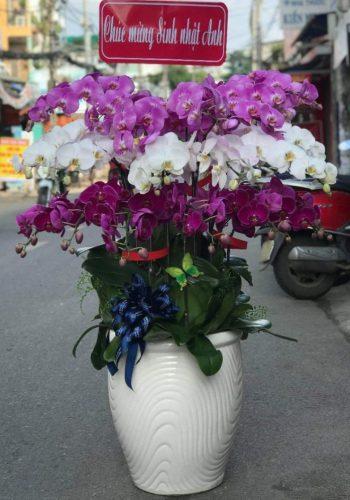 hoa lan hồ điệp lhđ 09