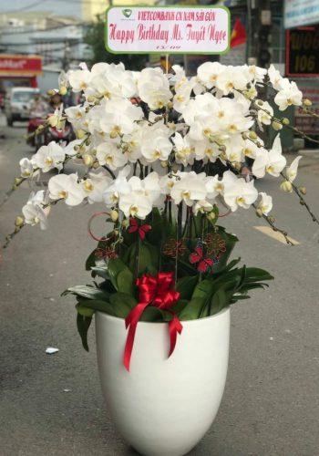 hoa lan hồ điệp lhđ 11