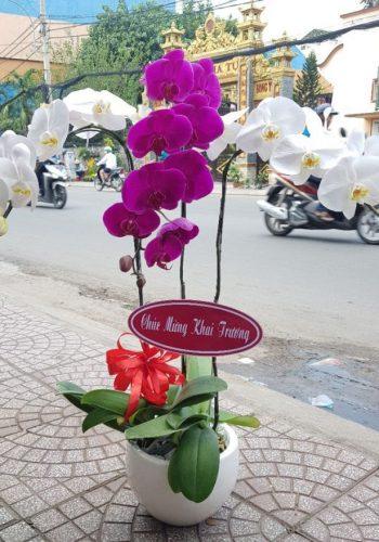 hoa lan hồ điệp lhđ 14