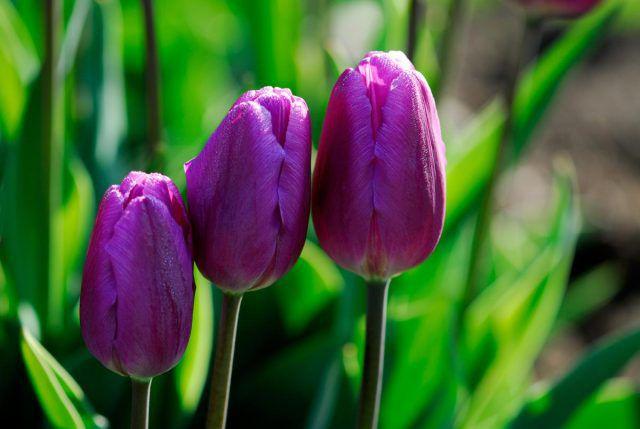 hoa màu tím 10