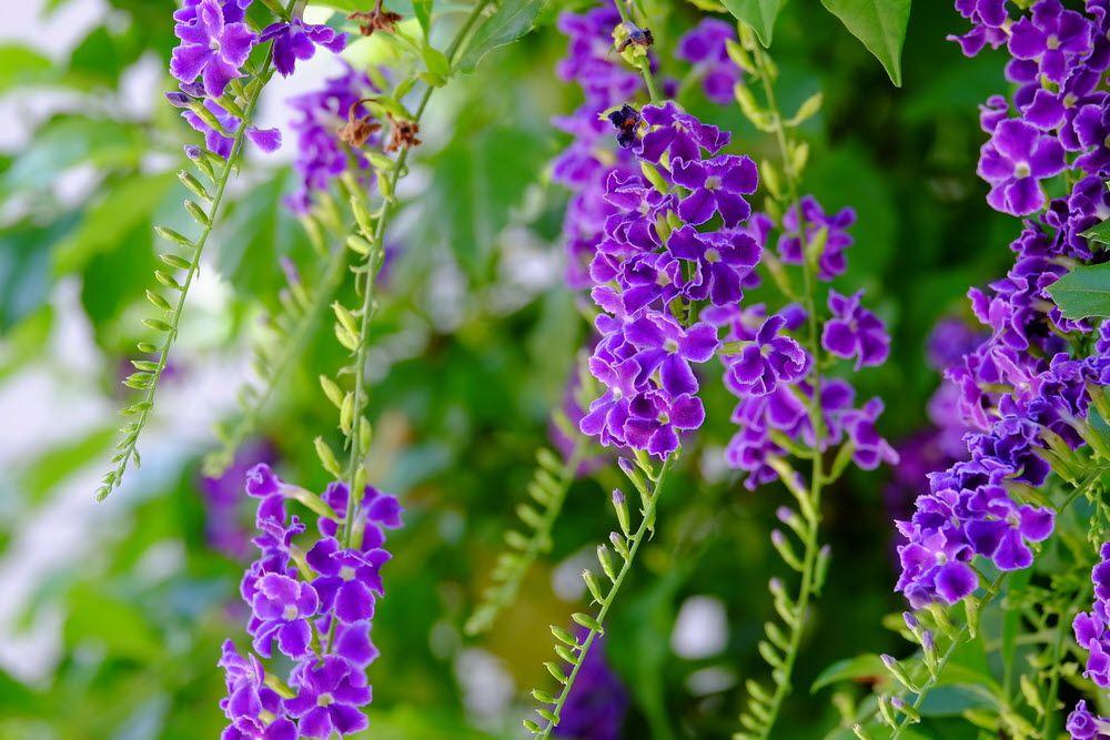 hoa màu tím 2