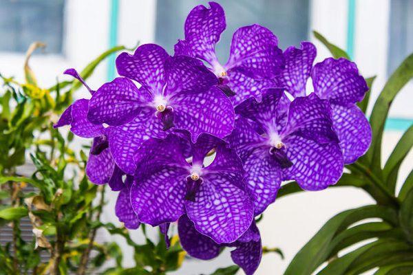 hoa màu tím 5