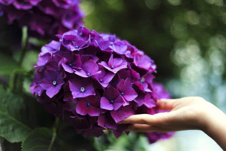hoa màu tím 9