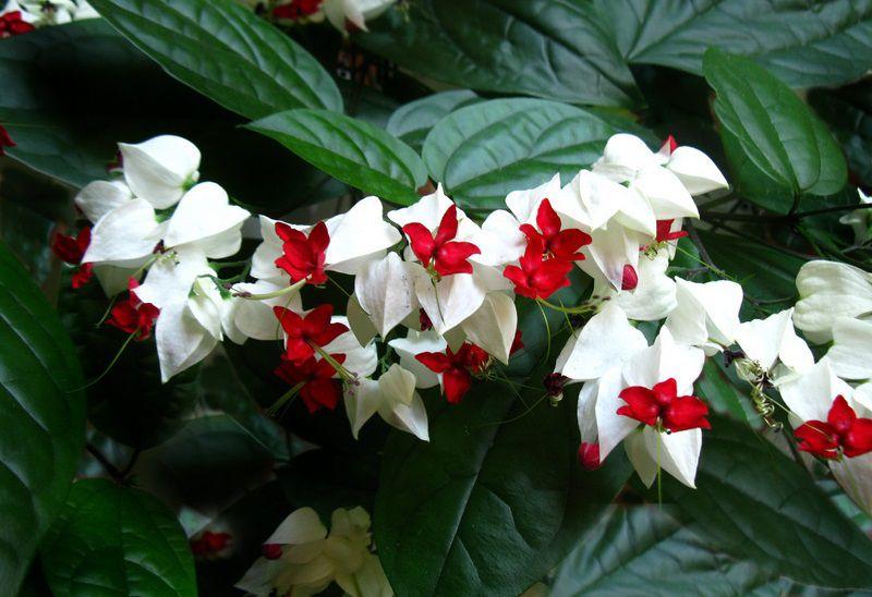 hoa màu trắng 2