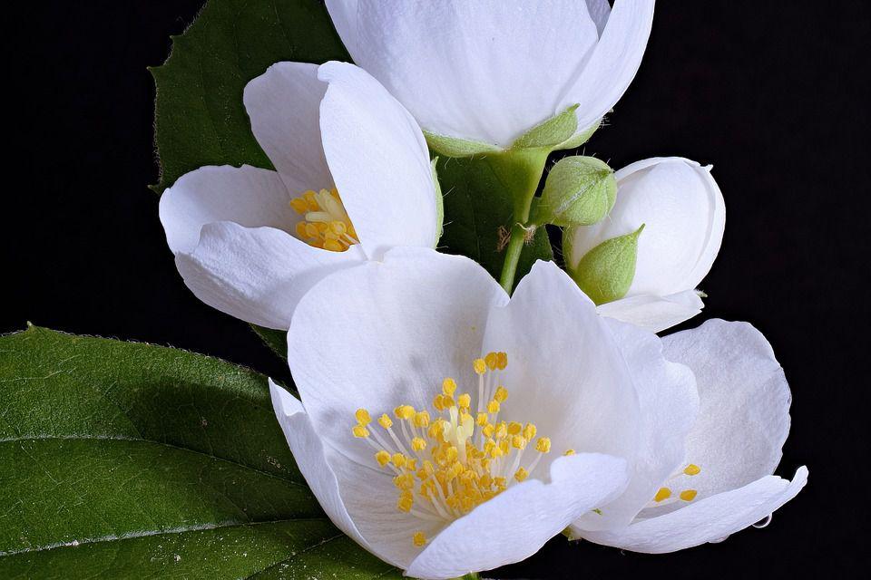 hoa màu trắng 6