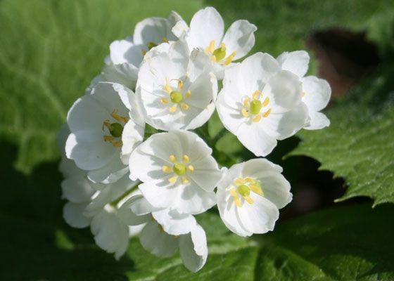 hoa màu trắng 9