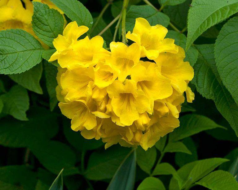 hoa màu vàng 1