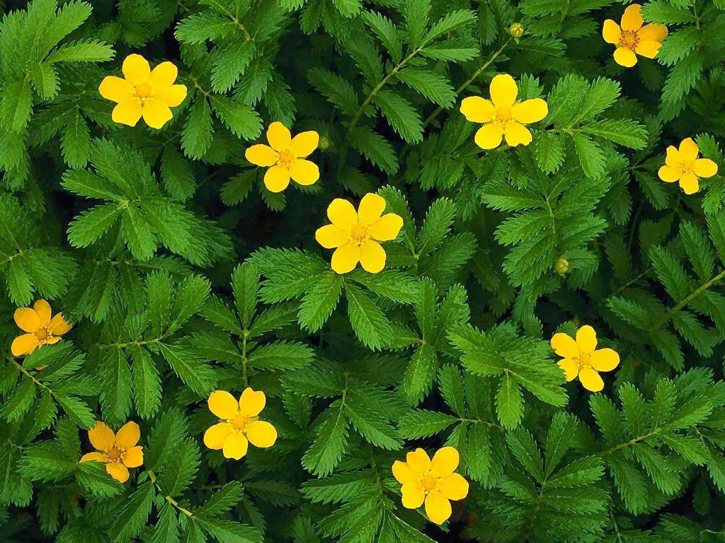 hoa màu vàng 10