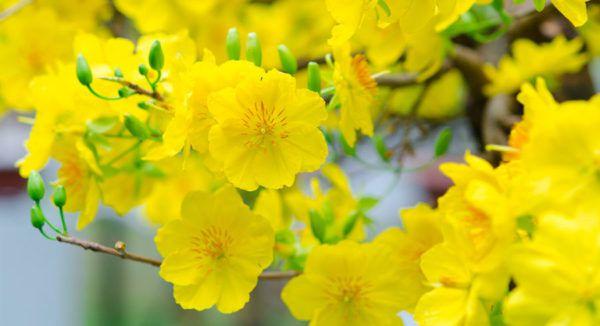 hoa màu vàng 2