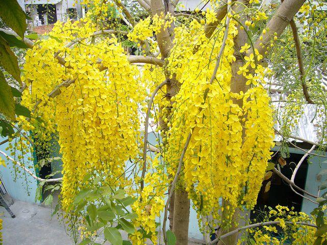 hoa màu vàng 4