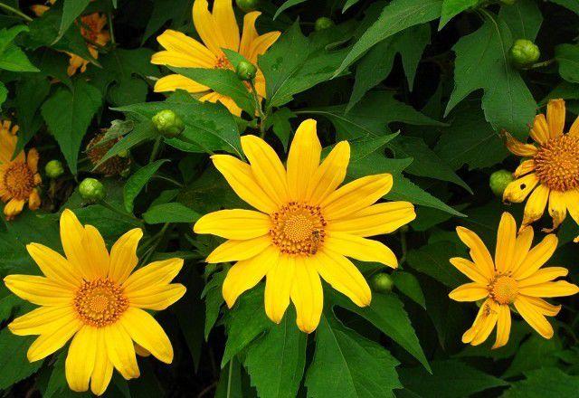 hoa màu vàng 6