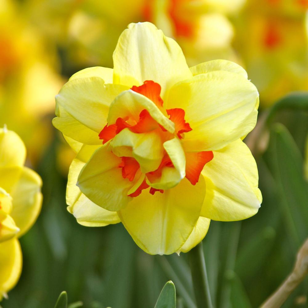 hoa màu vàng 7