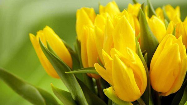hoa màu vàng 9