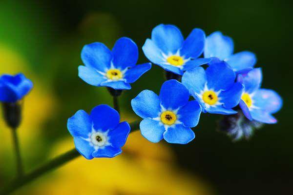 hoa màu xanh 1