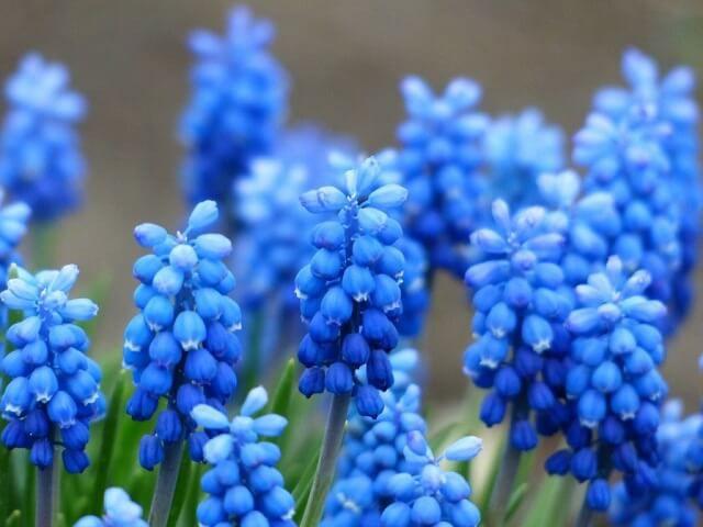 hoa màu xanh 6
