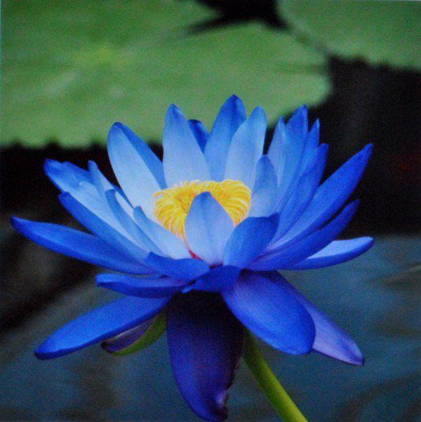 hoa màu xanh 9