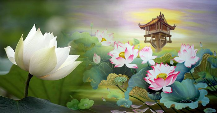 hình ảnh hoa sen đẹp nhất 2