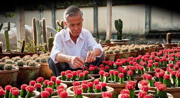 hoa xương rồng hồng ngọc
